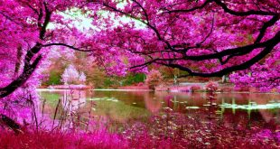 giardini-belli