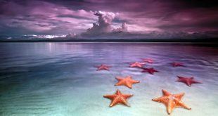 stelle marine