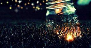 luce anima