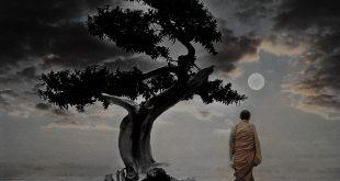 zen ok